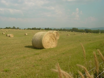 #290 Hay in a Field